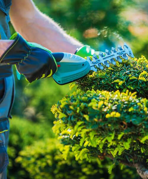 cape services entretien espaces vert